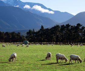 New Zealand farming gear