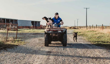 Man on quad bike with dogs wearing Stormline lightweight wet weather vest